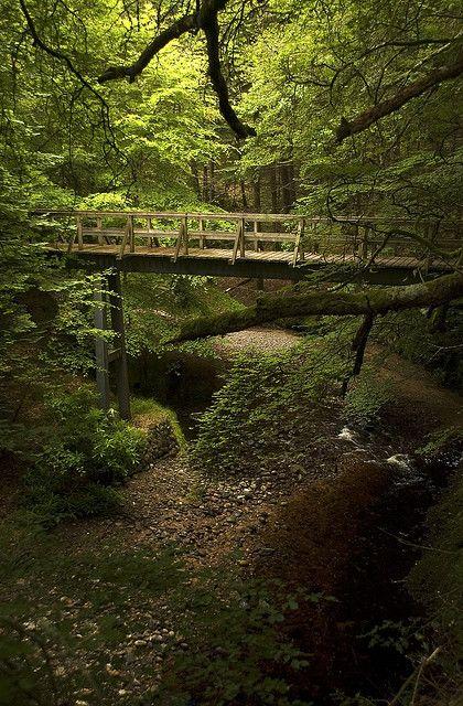 Cawdor Castle Forest, Scottish Highlands.