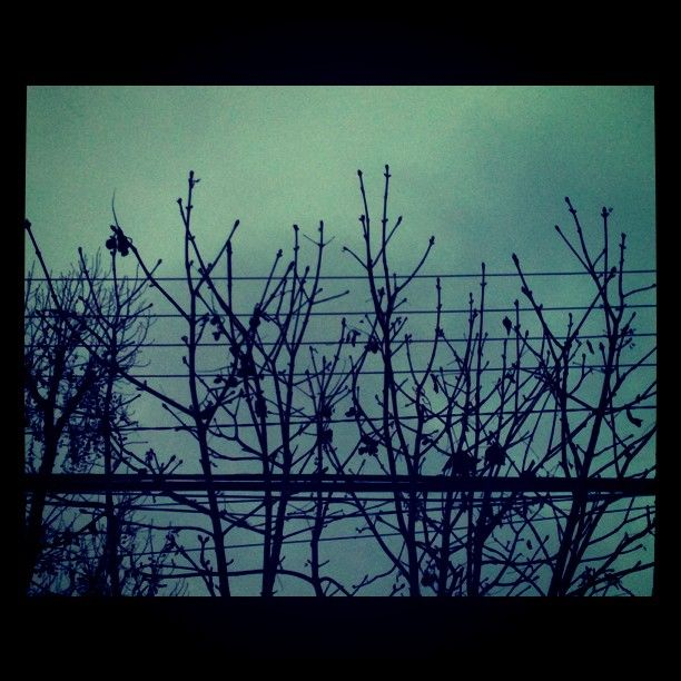Santiago. Winter. Branches.