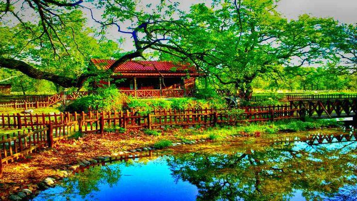 Oak Forest of Kouri