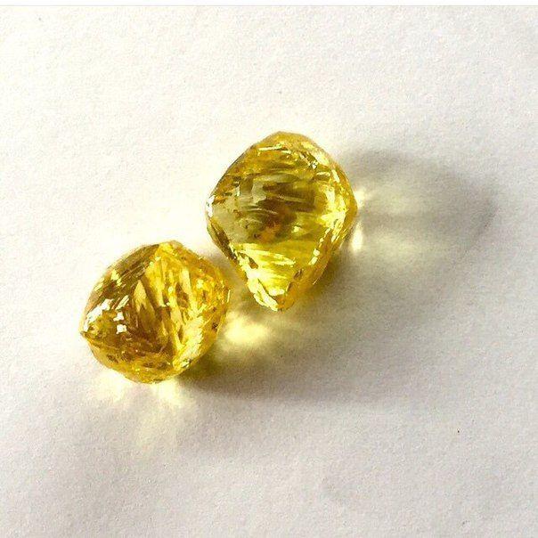 Жёлтые алмазы массой 23 и 21 карата. По расчетам: после огранки из них получится пара 11-каратных бриллиантов с цветом Fancy Vivid Yellow.