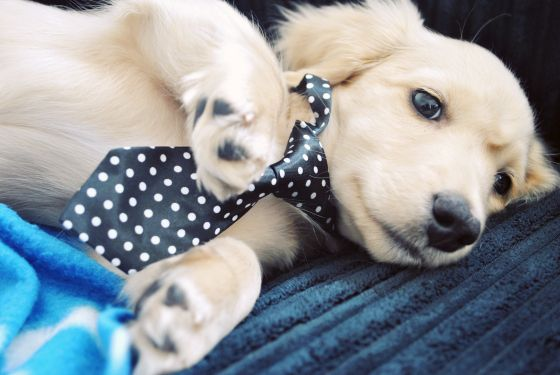 I'm Blue over You. found on Cute Overload