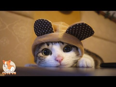 Image result for cats kneading compilation images