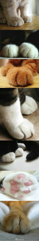 Kitty Cat Tootsies