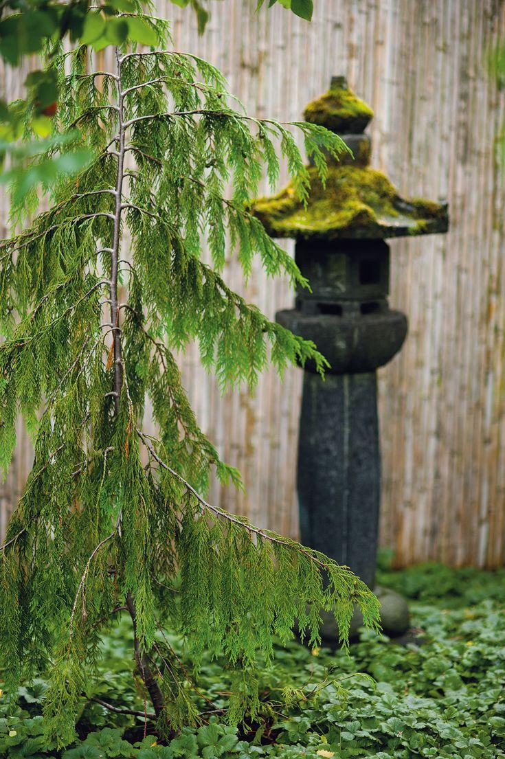 Japanilaiset puutarhat ovat usein rajattuja ja aidan suojissa. Bambusermi antaa…