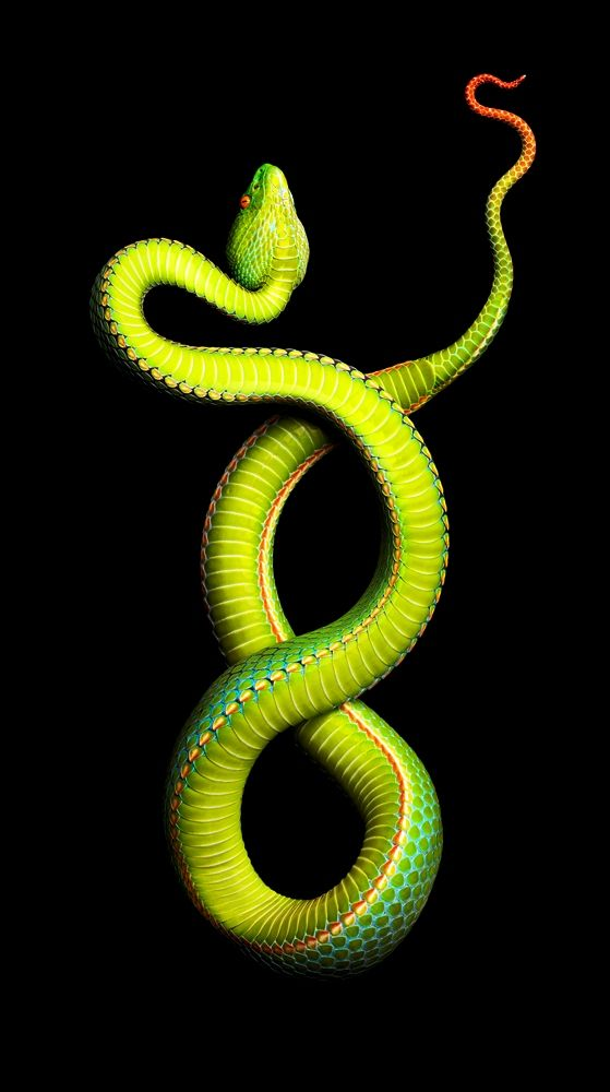 Vogel's Pit Viper. #venomous  Goddess green paint Type RR coming soon for Slither Wrath!  Ferrari move over for Federal government muscle car!  rear engine drive all medal!