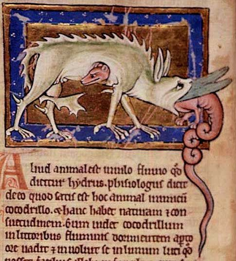 Hydrus: The hydrus is an animal that lives in the Nile River. It is the enemy of the crocodile. When it sees a crocodile sleeping with its mouth open, the hydrus first rolls in mud to make itself slippery, then enters the crocodile's mouth and is swallowed. It then eats its way out of the crocodile's belly, killing it.