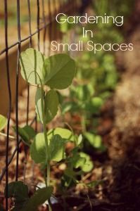 Tips on gardening in small spaces. How to plan out your garden and make it effect for the space you have to work with.