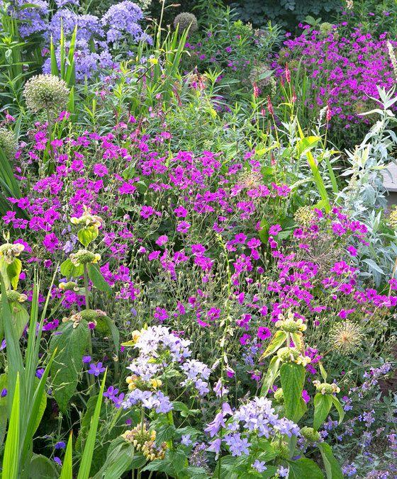 Natuurlijke border    Natuurlijke border Beleef de trend van dit moment! Een vrolijke mix van vaste planten maakt van elke tuin een feest. In een natuurlijke border vinden we zowel vroege als laatbloeiende planten. Vanaf mei tot aan het eind van de zomer bloeien deze sterke planten uit de natuurlijke border uitbundig. Lekker lang genieten van kleurige bloemen in de tuin dus! In de natuurlijke border zien we een losse, natuurlijke stijl waarbij de planten mooi door elkaar groeien. Helemaal…
