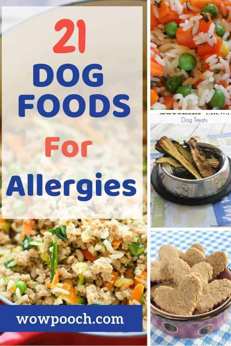 If Your Dog Suffering From Allergies Learn These 21 Quick And