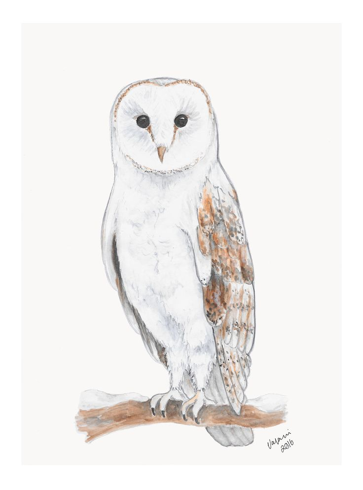 Barn Owl watercolor painting by Valpuri