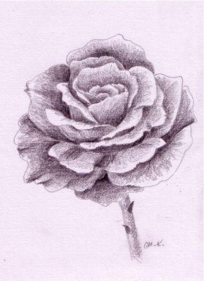 Rose Zeichnen Schritt Fur Schritt Drawing Pinterest Zeichnen