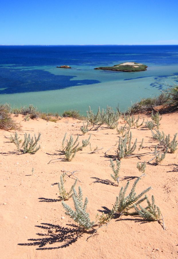 Shark Bay | Australia (by Guillaume Samie)