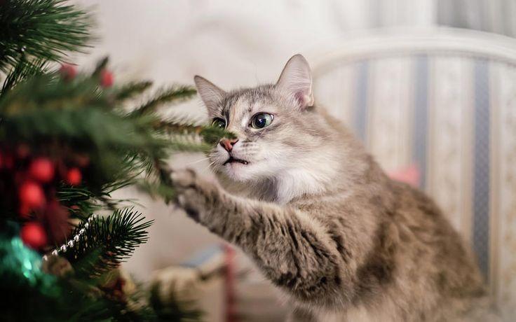Cat And Christmas Tree Photograph by Oksana Ariskina #OksanaAriskina #OksanaAriskinaFineArtPhotography #Artworks #FineArtPhotography #HomeDecor #FineArtPrints #Cat #PrintsForSale #Portrait  #Christmas #Xmas