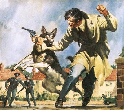 Alsatian police dog Postcards, Greetings Cards, Art Prints, Canvas, Framed Pictures, T-shirts & Wall Art by James Edwin McConnell