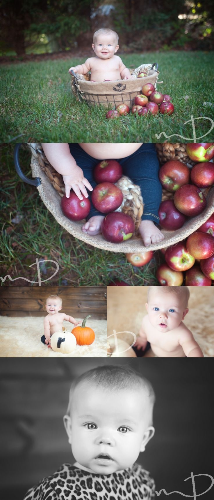 Six Month Old Baby Session - Asheville Baby Photographer | Asheville Maternity & Newborn Photographer - Molly Dockery Photography Blog - Fall Baby Session