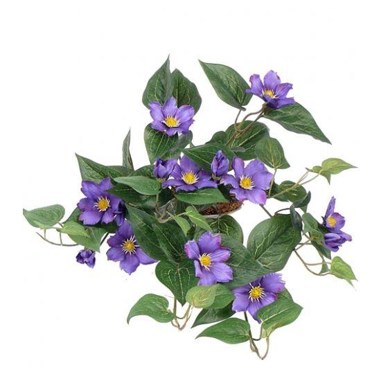 Bosje nep clematis paars 60 cm  Bosje kunst clematis paars 60 cm. Dit bosje clematis met paarse bloemen heeft een formaat van ongeveer 60 cm.  EUR 15.95  Meer informatie