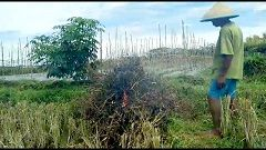 BANYUMAS – 30 hektar dari total 75 hektar tanaman padi di Banyumas yang puso akibat serangan hama wereng coklat bakal memperoleh klaim asuransi. Hal itu menyusul keikutsertaan petani dalam program asuransi. program asuransi bagi petani sebenarnya sangat bermanfaat. Pihak dinas pertanian banyumas juga telah mensosialisasikan sejak lama, namun respon dari tiap petani berbeda-beda.   #dapat Santunan Asuransi #Gagal Panen Puluhan Petani