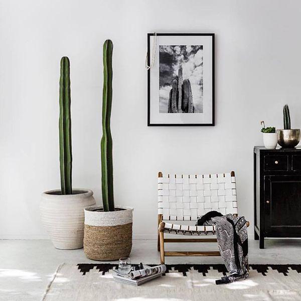 Pampa rugs.