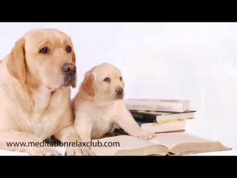 Pet Therapy: Dog Spa with Healing Music for Pet Care and Dog Day Care - YouTube