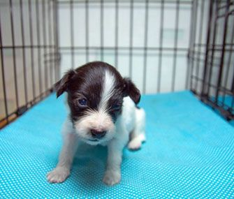 Using a crate to raise a puppy is the kindest and fairest method of all, because it provides a puppy with a lesson for life. Dr. Marty Becker explains.