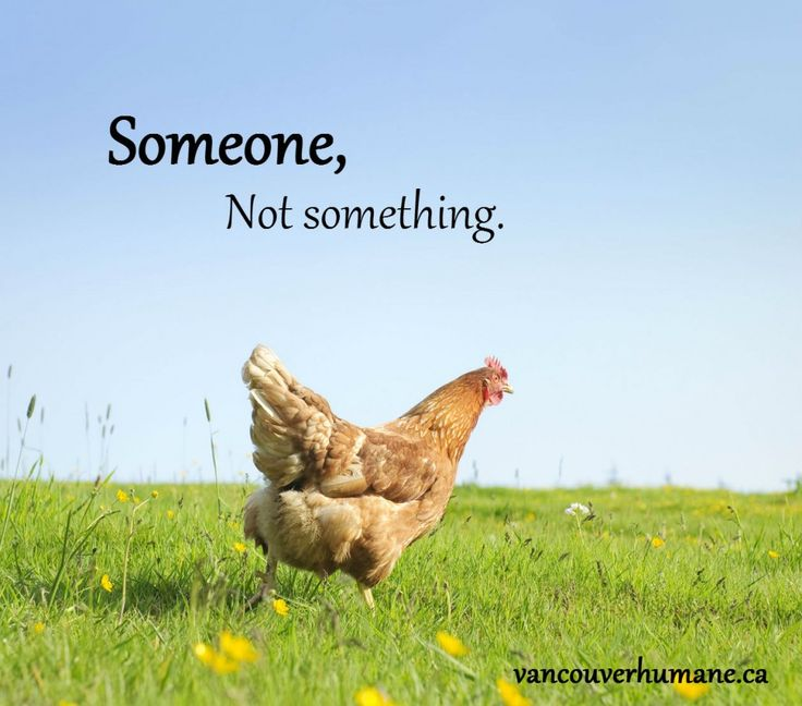 It is a shift in thinking. Someone, not something. Vancouver Humane Society