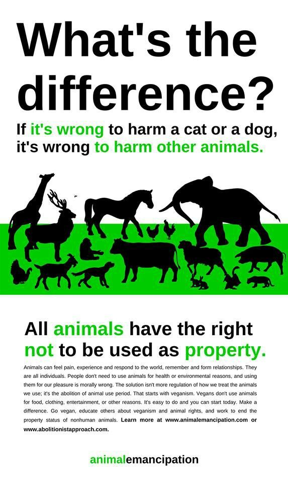What's the difference? If it's wrong to harm a cat or a dog, it's wrong to harm other animals. All animals have a right now to be used as property. Animal Emancipation. Animal cruelty. Animal rights.