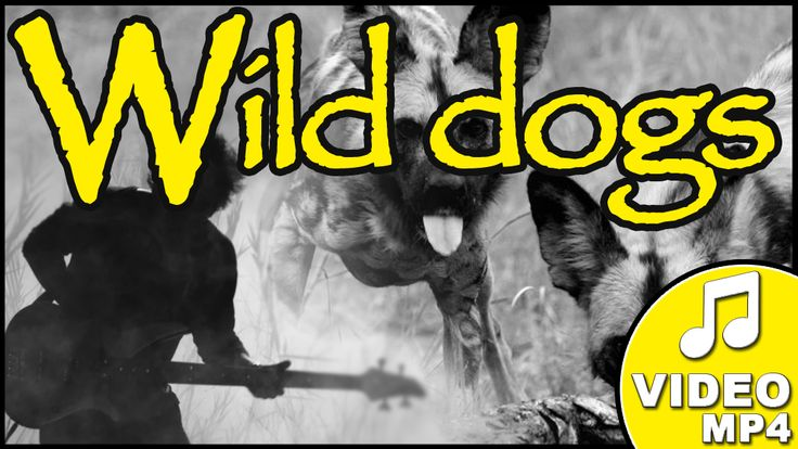 BUY the Wild dogs song on www.leopard.tv! Written  by Machiel Roets and sung by In the Beginning. #leopard #wilddogs #music
