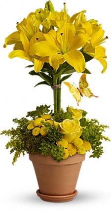 Gender Neutral; Yellow Fellow #Flowers  http://www.teleflora.com/flowers/bouquet/yellow-fellow-372565p.asp
