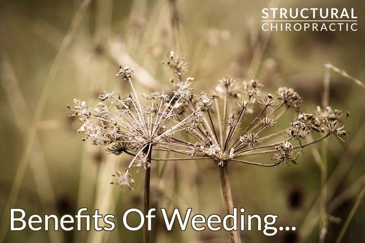 Health Snapshot - Benefits of Weeding