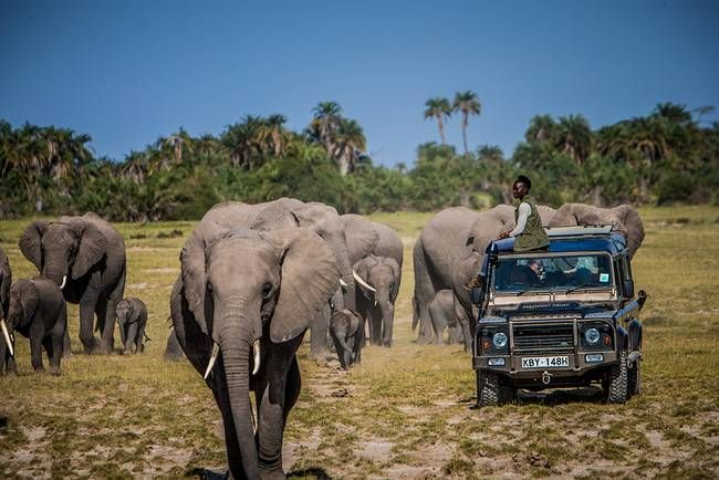 Lupita Nyong'o joins campaign to end the global ivory trade : TreeHugger