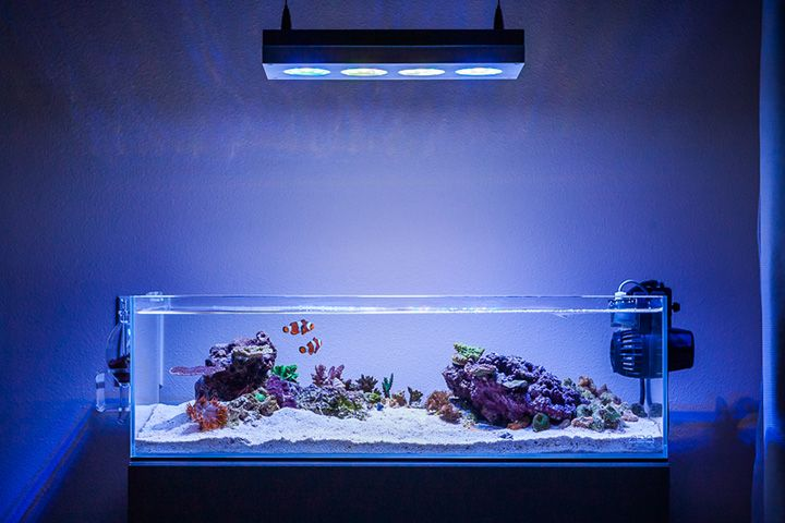 Ada 60f Shallow Reef 물생활 Pinterest Shallow
