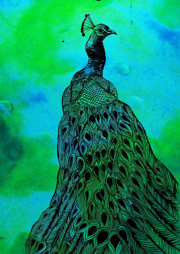 Peacock - Illustration