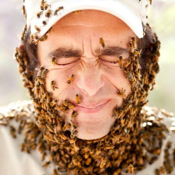 How to Get Rid of Bees? How to Prevent Bees from Nesting? How to Eliminate Bees from home? Natural Ways of Bee Extermination. Prevent Bees. Avoid Bees.