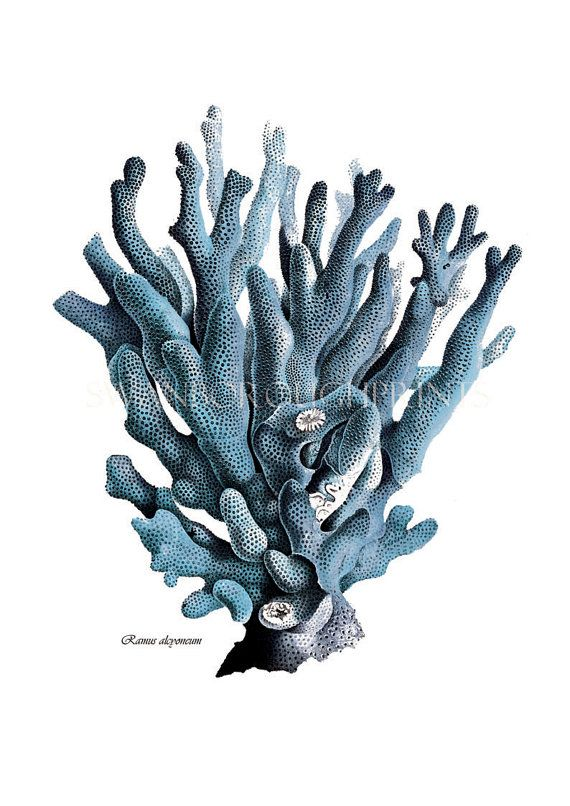 Indigo Blue Coral Art Print Vintage Decor Print Beach