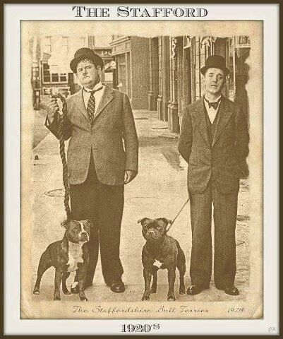 staffordshire bull terriers, taken in the 1939's and before. So they are not this new species of dogs that fight, and just because of their muscualr selves, doesn't ,,mean they are made to fight. THY DO SO MUCH MORE, AND SO LONG AGO!!!