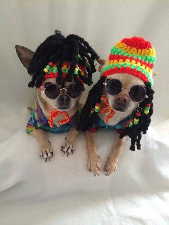 Rasta dog carnival hat with beaded dred locks - for small size dogs chihuahua / yorkie