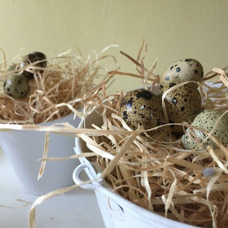 Oster Deko aus Holzwolle, Wachteleiern und Zinktöpfen  Easter Decor