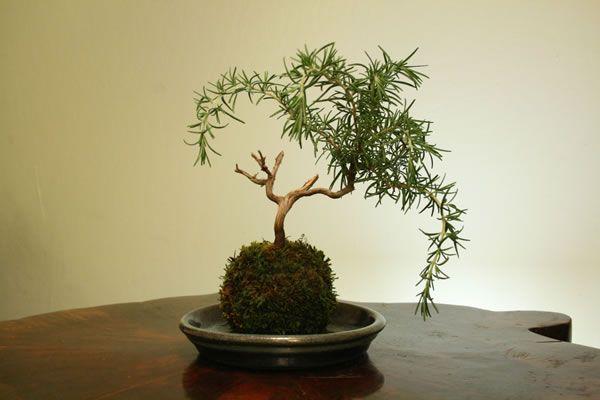 Para dar un toque verde, con poco espacio, #Kokedamas en http://www.alamaula.com/q/kokedamas/S19G1