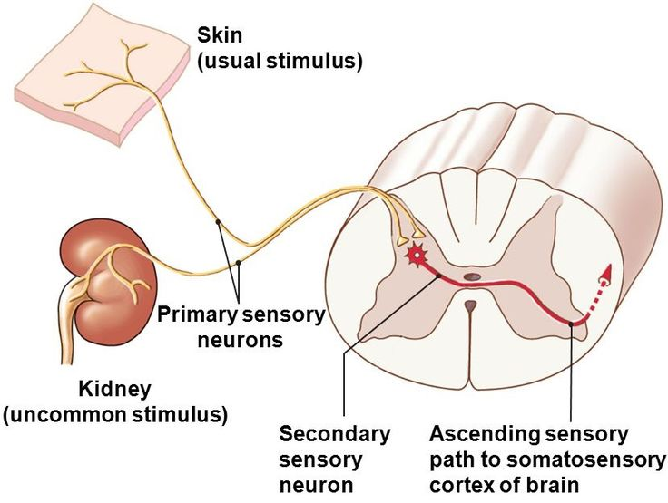 Effects of Skin Stretch Sensory Stimuli on Balance in Patients with Diabetic Neuropathy