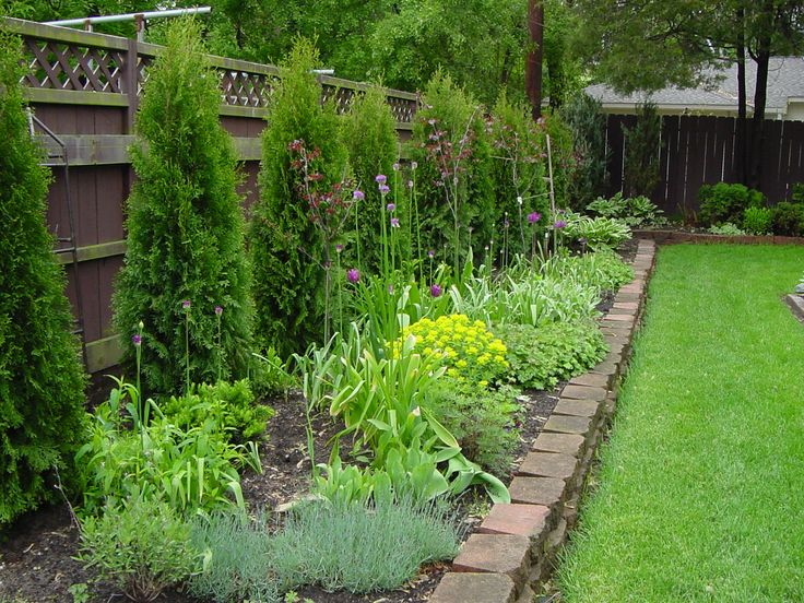 image showing arborvitae planted along fence line on backyard fence landscaping id=92935