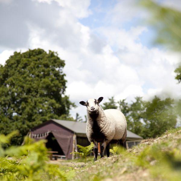 Het Boeren Bed in België   boerderijvakantie