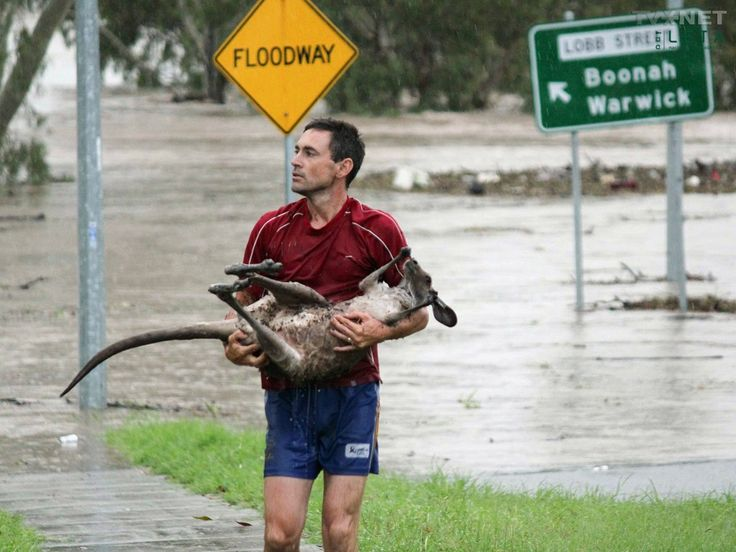 Meanwhile, in Australia Gallery: Meanwhile in Australia: Roo Rescue Picture | Break.com