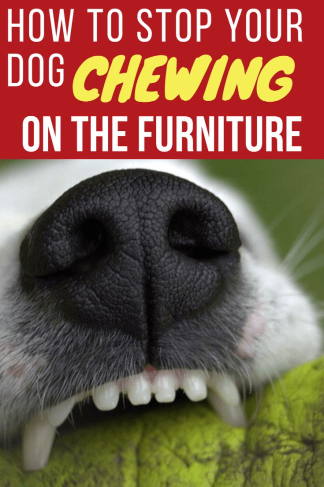 How To Stop Dog Or Puppy Chewing On Furniture