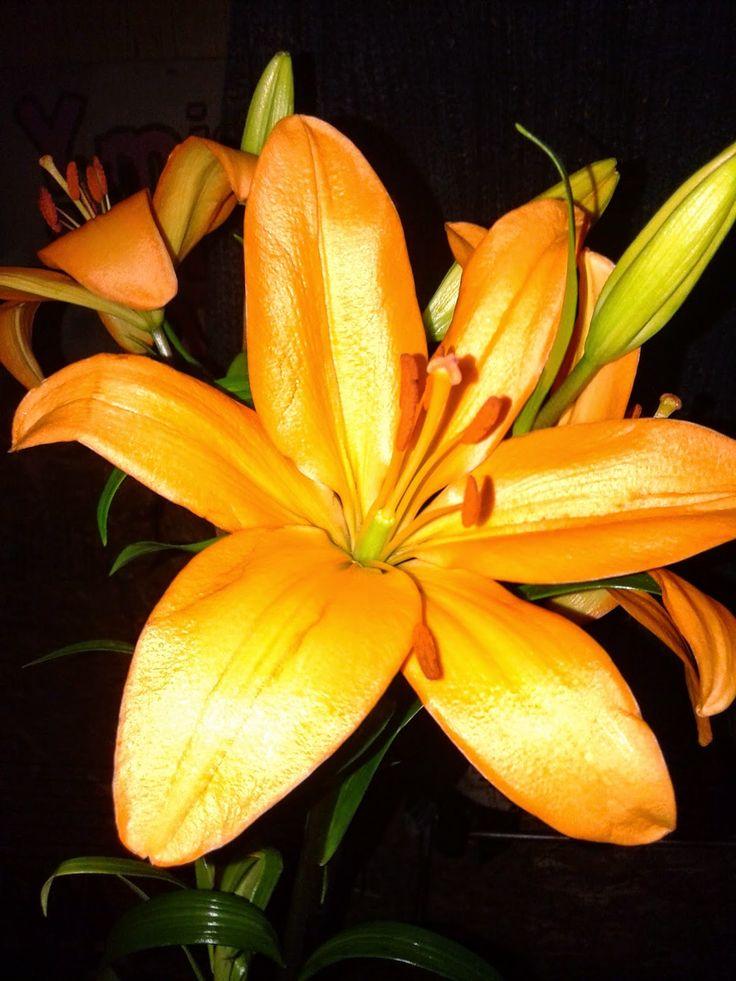 sonrisamaravillosa.blogspot.com: Septiembre en mi