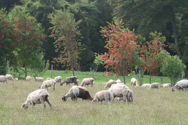 chiloe island | ... sites around the world: Chiloé Island and organic farming (Chile