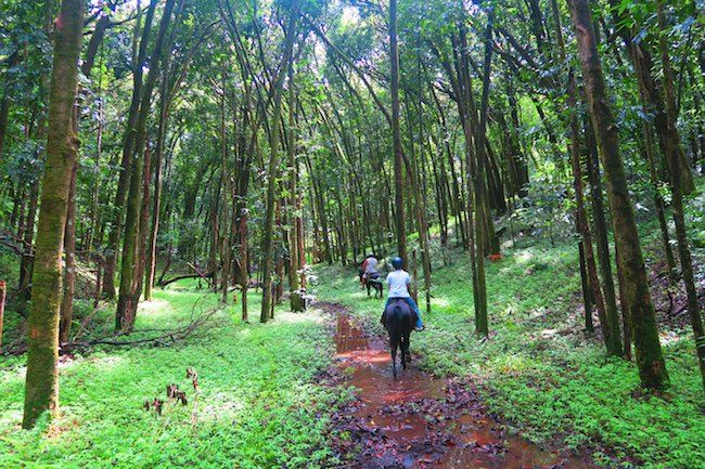 Horseback riding in the tropical rainforest in Hiva Oa - Marquesas Islands