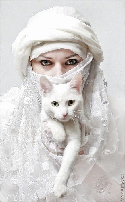 white cat with white Hijabi woman...