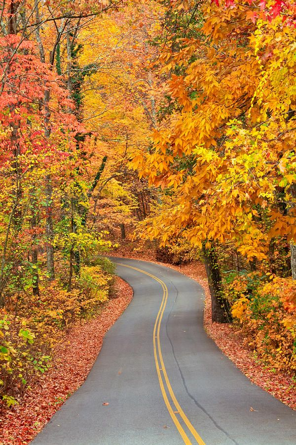 Autumn Drive - Signal Mountain, TN