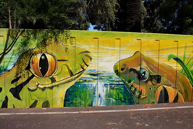 Endangered Species - Southern Barred Frog,Giant Barred Frog - Mixophyes iteratus and Fleay's Barred Frog - Mixophyes fleayi (Treasures of the Tweed Mural Project)