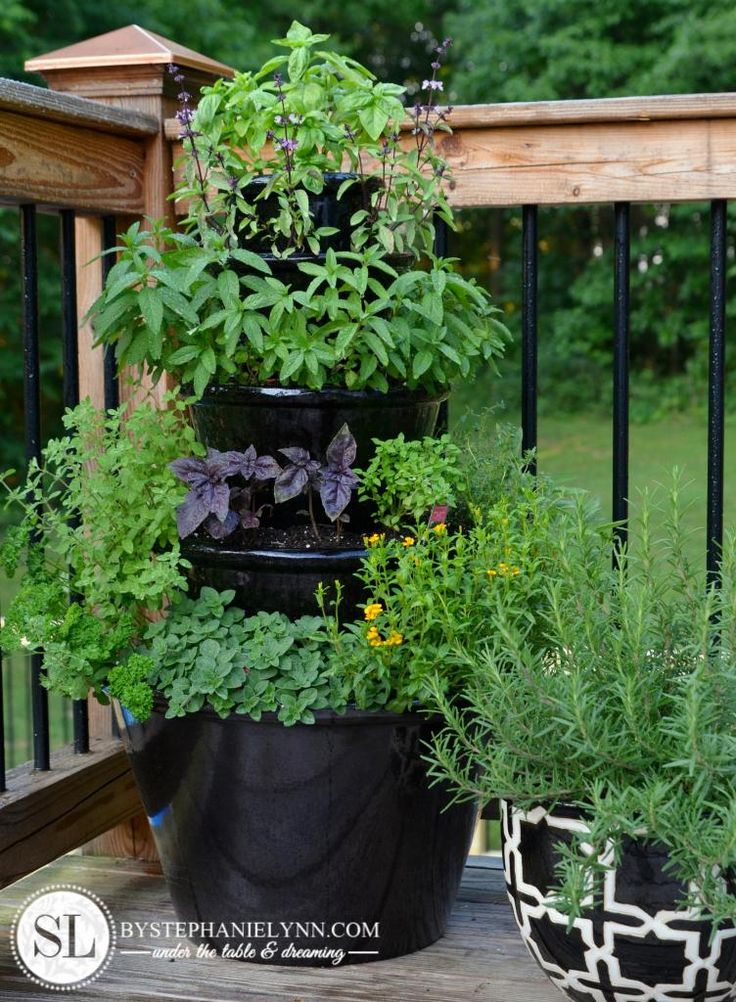 Flower Pot Herb Garden Stack .  Close up photographs of individual herbs.